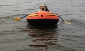 funny-pictures-comedy-dog-rows-boat-funny-stuff1