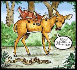 via jaguarmojado.startlogic.com